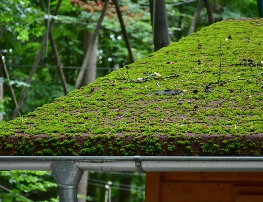 Comment démousser sa toiture ?
