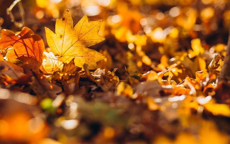 entretien jardin à l'automne